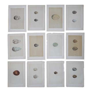 Antique 19th Century Lithographs-Eggs-Set of 12 For Sale