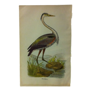 "Vintage Birds of Water Color Print, ""The Heron"", Circa 1930 For Sale"