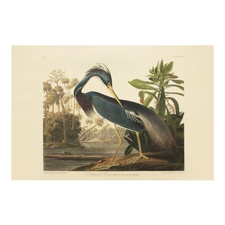 1990s Louisiana Heron by Audubon, Large American Classical or Chinoiserie Print For Sale