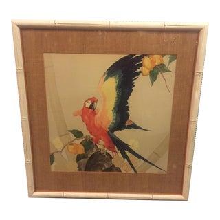 Stark Davis Framed Macaw Print For Sale