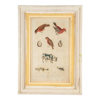 "Martyn ""Natural History"" Hand-Colored Engraved Plate, 1785 For Sale"