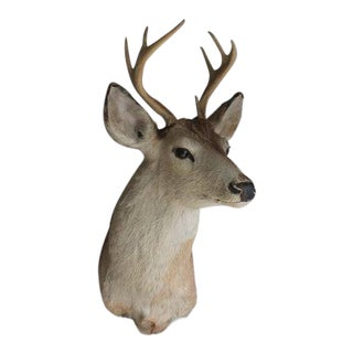 Vintage Adult Taxidermy Deer Head Mount