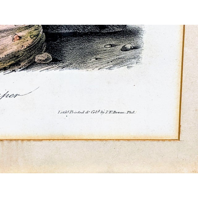 1940s John James Audubon Hand-Colored Bartramian Sandpiper Lithograph by Jt Bowen For Sale - Image 6 of 8