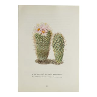Vintage Cactus Succulant Print For Sale