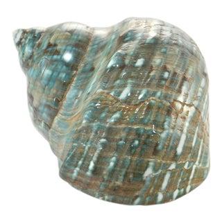 Aqua Turbo Shell