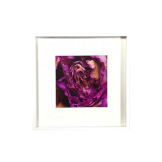 Framed Shadow Box Dried Hot Pink Rose Photography For Sale