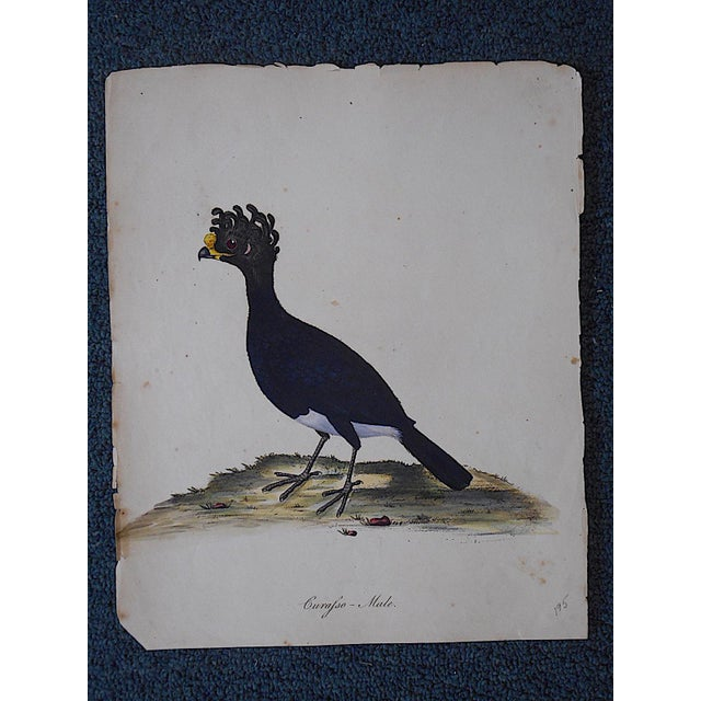 An 18th century hand colored copperplate engraving by George Edwards depicting a bird in its natural setting. A great...