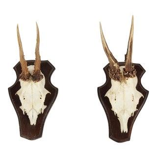 Vintage German Roe Deer Antlers - a Pair