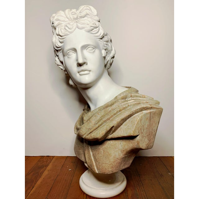 Italian Marble Bust of Appollo Belvedere For Sale - Image 9 of 12