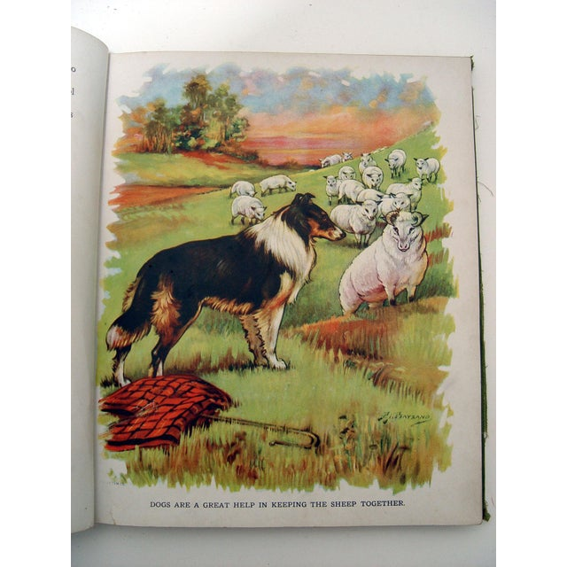 1928 Animal Friends Story Book For Sale In San Antonio - Image 6 of 10