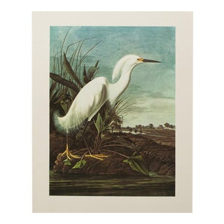 Audubon Lithograph of Snowy Heron, 1966