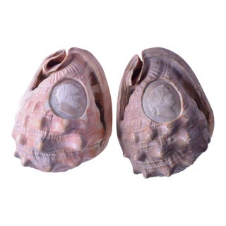19th Century Italian Naples Carved Conch Shells - a Pair For Sale