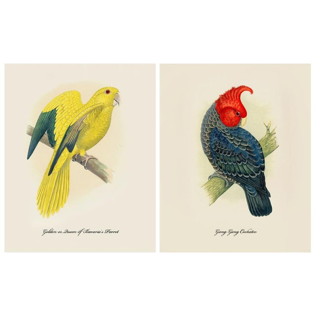1884 Alexander Francis Lydon, Parrot Reproduction Set of 12, N1 For Sale - Image 4 of 11