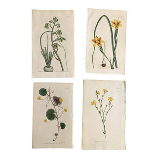 Set of Four 19th Century Hand-Colored Botanical Prints