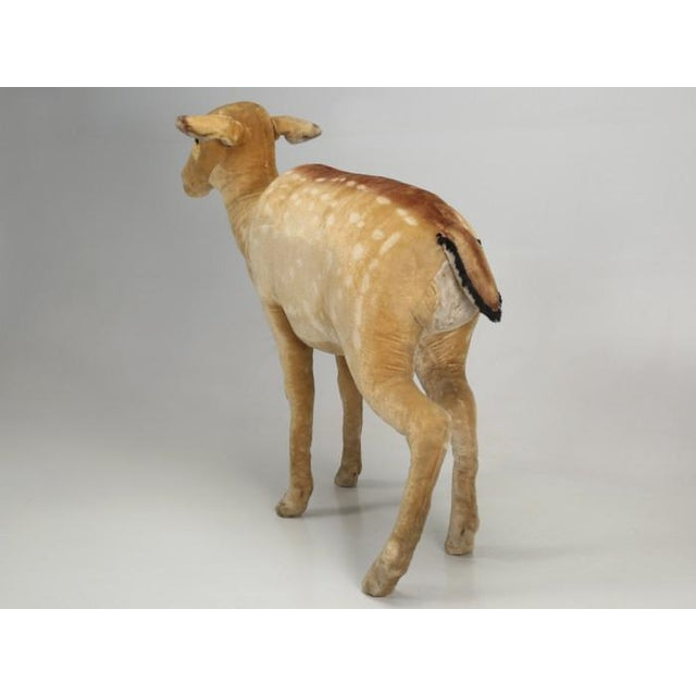 """1963 Steiff Mohair Fallow Deer """"Studio Animal"""" For Sale - Image 12 of 13"""