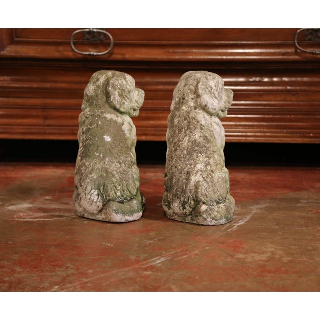 French Vintage Patinated Cast Stone Saint Bernard Dogs Sculptures - a Pair For Sale - Image 4 of 9