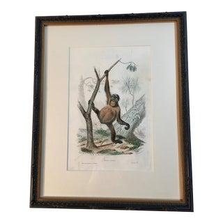 Antique Framed Orangutan Natural History Print