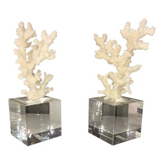 Cordelia Lucite Coral Paperweights - A Pair For Sale