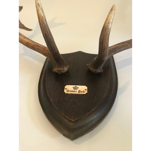 Late 19th Century 19th Century Black Forest Red Stag Antlers Mounted on Shield Shaped Plaque For Sale - Image 5 of 13