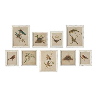 Framed Aviary Bird & Nest Habitat Prints - Set of 9 For Sale