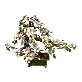 Cherry Blossom Jade Tree