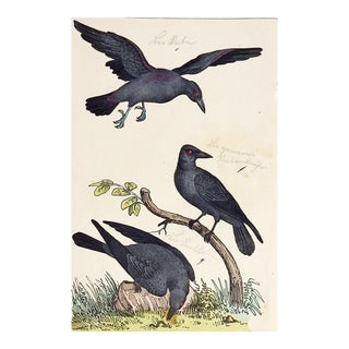 Hand Colored Crow Raven Woodcut Print