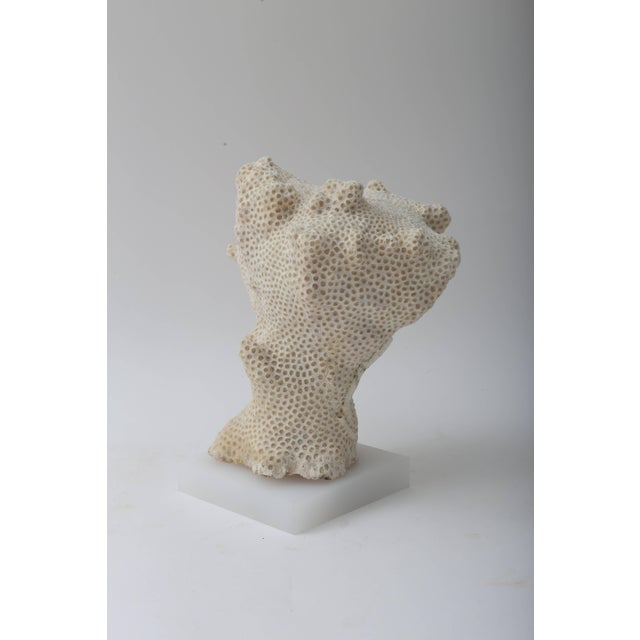 White Specimen Conch Shell Form Coral Mounted on Solid White Lucite Base For Sale In West Palm - Image 6 of 8