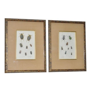 Pair of 19th Century Hand Colored Insect Plates