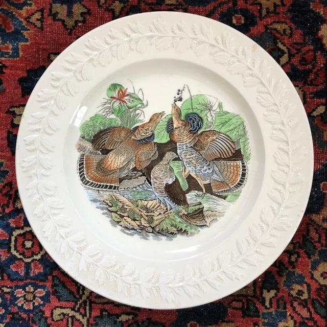 Ceramic Antique Adams England Audubon Birds of America Plates- Set of Four For Sale - Image 7 of 11