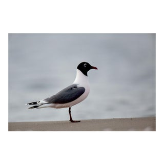 KLEMENS GASSER / THERE WILL BE FRANKLIN'S GULLS WITHOUT YOU 20150529 6:22 PM, 2015 For Sale