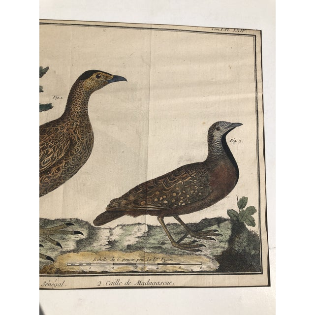 French 18th Century French Matted Bird Engraving by Martinet Featuring a Senegal Partridge and a Madagascar Quail For Sale - Image 3 of 13