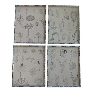 Vintage Collection of Botanicals - Set of 4 For Sale