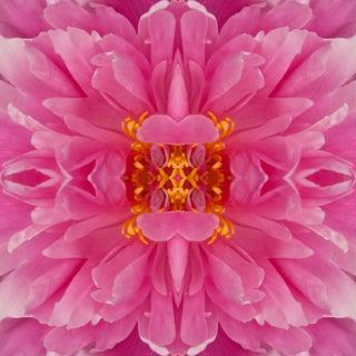 """Frazel Dazel Ill"" Floral Botanical Pink, Yellow Limited Edition Color Photography For Sale"