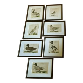 1700s Antique Water Fowl Framed Repro Prints - Set of 7 For Sale
