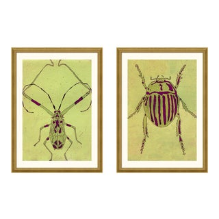 Beetle & Bug Diptych, Light Series no. 3 by Jessica Molnar in Gold Frame, Large Art Print For Sale