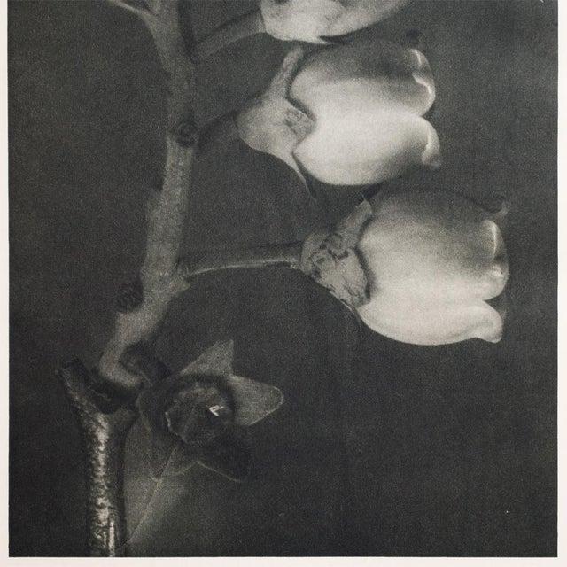 Karl Blossfeldt Double Sided Photogravure N91-92 For Sale - Image 5 of 7