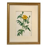Image of Antique 19th C. Original Watercolor Floral Botanical Painting For Sale