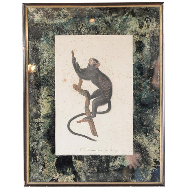 18th-C. Colored Monkey Print by Jean Baptiste - Image 1 of 10
