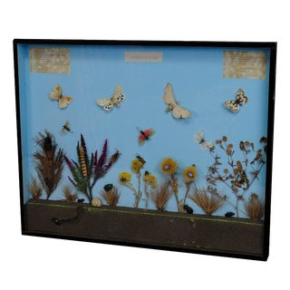 A Great Vintage School Teaching Display of the Insects of the Heath For Sale