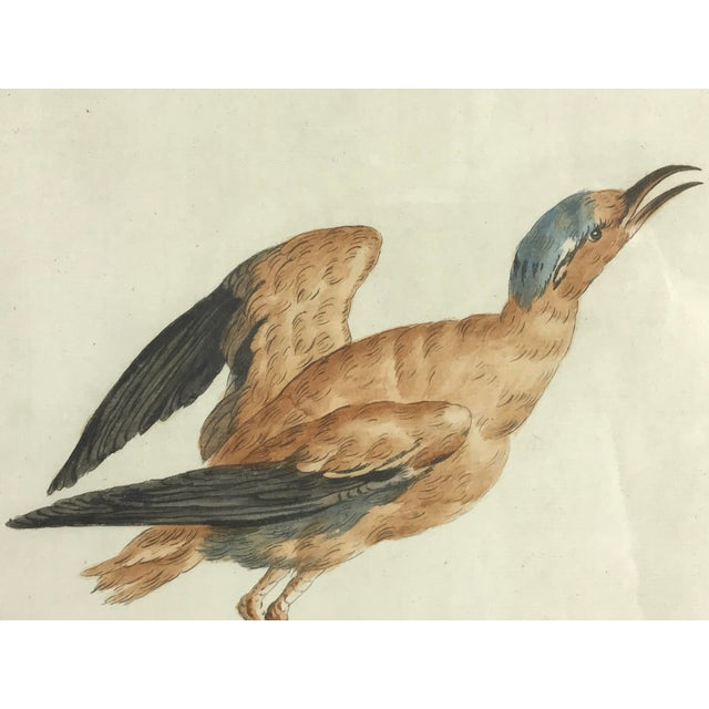 18th Century Courser Bird Print Hand Colored Engraving by Saverio Manetti For Sale - Image 4 of 5