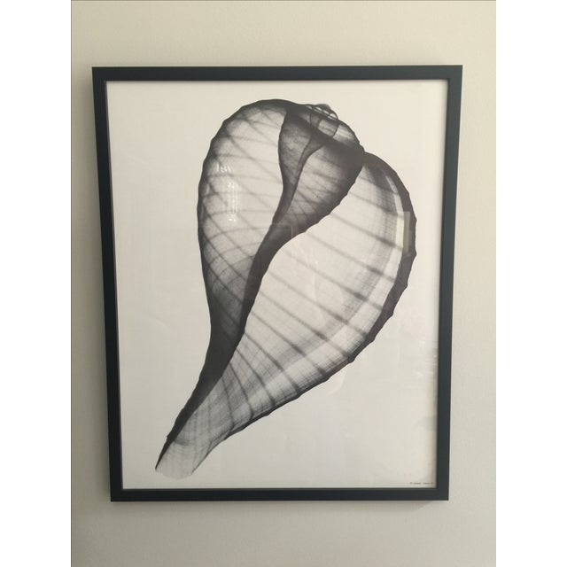 Framed George Green X Ray Fig Shell Ficus Print - Image 2 of 4