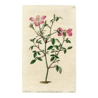 Miss Lawrence's Rose, 1821 Engraving For Sale