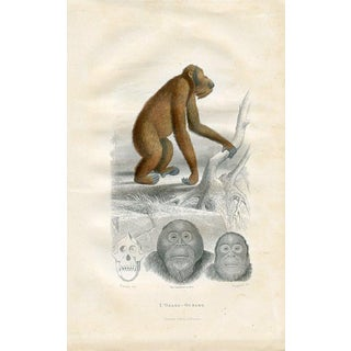 The Orangutan, 1880 French Print For Sale