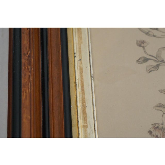 19th Century French Hand Colored Floral Etchings-A Pair For Sale - Image 9 of 12
