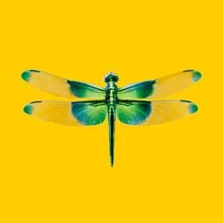 DWM | MALOOS Modern Dragonfly Yellow and Green Custom Print Wallpaper For Sale