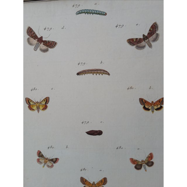 19th-Century French Butterfly Prints - A Pair - Image 4 of 4