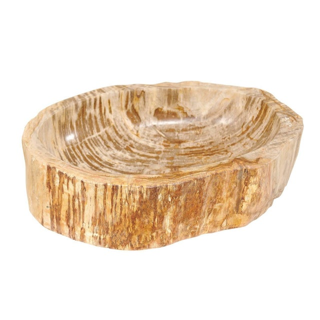 Organic Modern Polished Petrified Wood Sink For Sale - Image 9 of 9