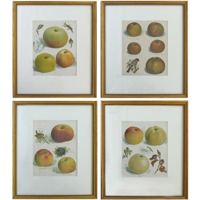 Glass European Botanical Prints of Fruit & Birds - Set of 4 For Sale - Image 7 of 7