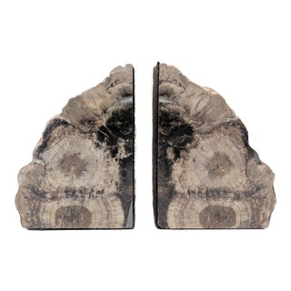 Vintage Petrified Wood Bookends - a Pair For Sale