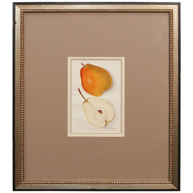 Orange Architectural Digest Fruit Print For Sale - Image 8 of 8